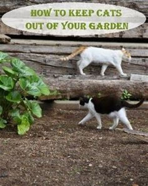 how to keep cats out of your backyard 1000 images about graden tips on pinterest weed mole