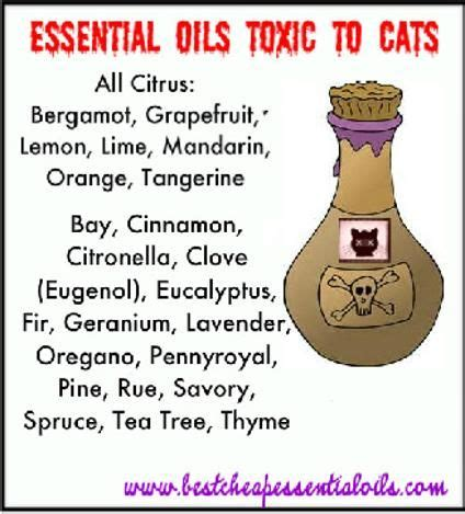 essential oils toxic  cats cats  essential oils