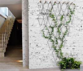 easy to grow climbing plants the best indoor vines and climbers that are easy to grow