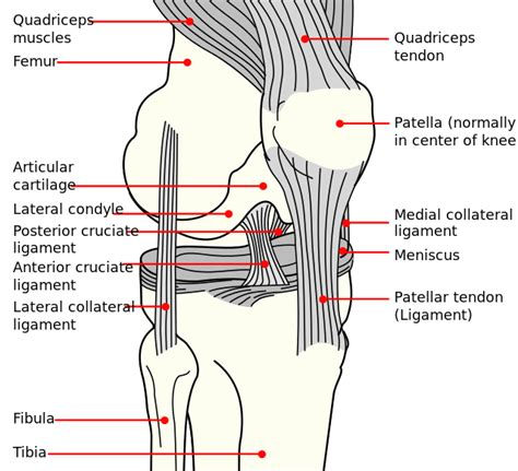 diagram of knee injured through knee pieciak