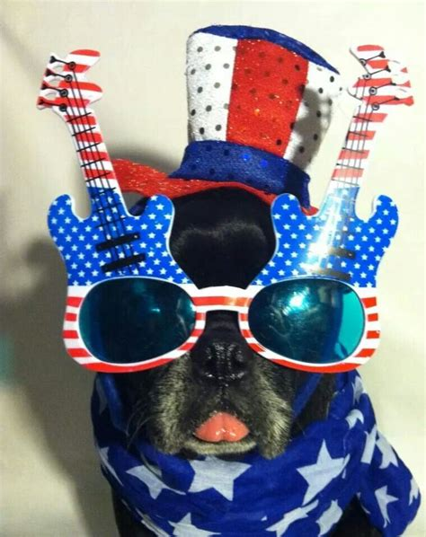 patriotic pug 17 best images about pugs on pug birthday pug and pug photos