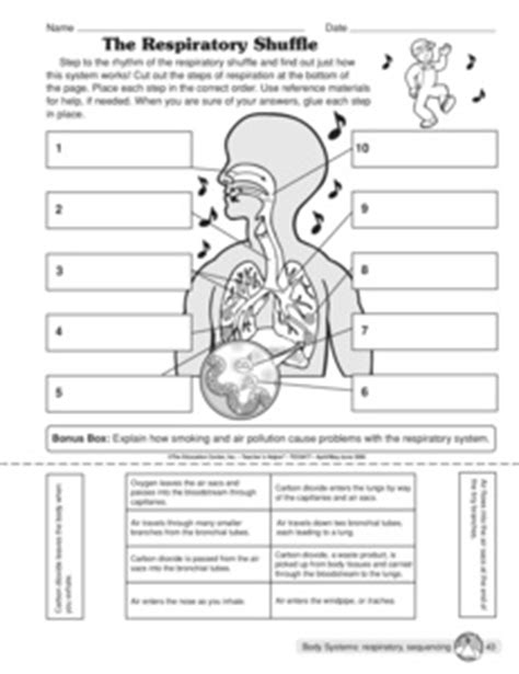 printable worksheets on the lungs respiratory system worksheet lesupercoin printables