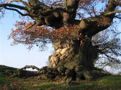 Tree Netting Ireland by Who Killed The King Was It Eochaid The Slayer An Ancient