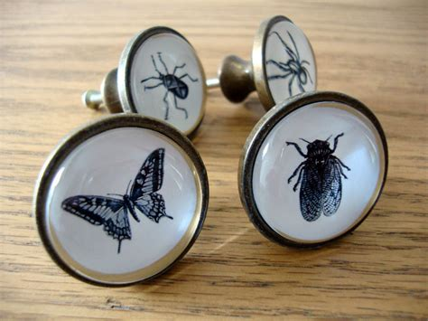 insect drawer knobs spider fly beetle cupboard door