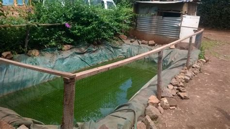 new backyard tilapia farming design ideas how to