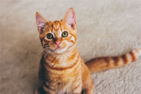 how to my to come when called how to use cue word n treats my cat to come when called