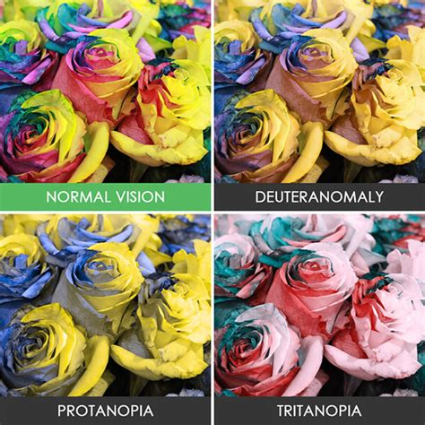 what does color blindness look like how the world looks like for color blind design swan