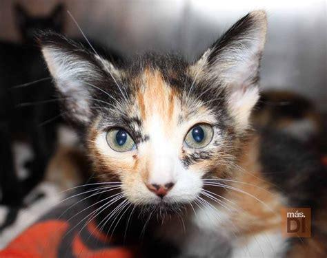 Tas Fashion Cewe Auris 256008 mascotas arca de no 233 191 los perros y los gatos nos curan mascotas
