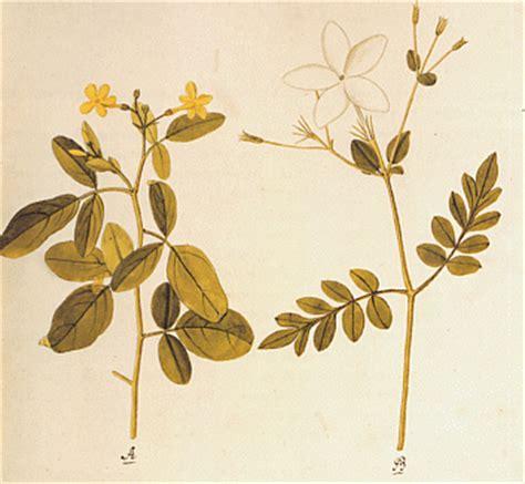 ein garten meisterwerke der botanischen illustration mahavamsa 15 die entgegennahme des mahavihara