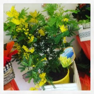 fiore profumatissimo fiori profumati idee fiorite
