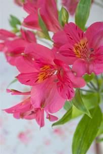 Round Vase With Flowers Alstroemeria A Long Lasting Cut Flower Flowerona