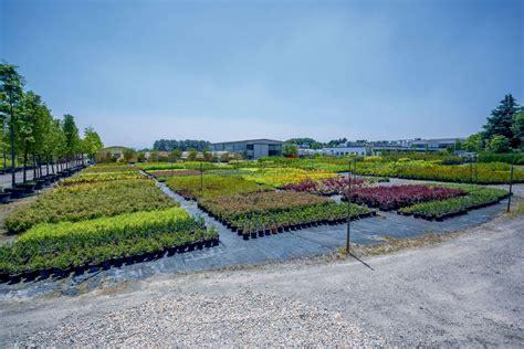 vivai pavia vivaio garden center in provincia di pavia