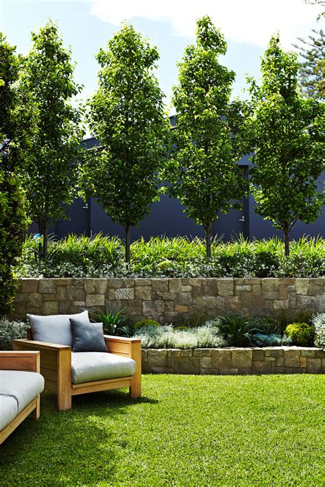 privacy trees for backyard fence line ornamental pear jasmine and grass front