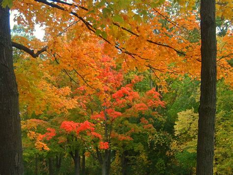 michigan fall colors some fall colors from michigan wyandotte trenton