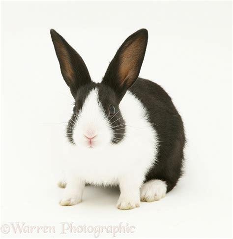 black and white rabbit wallpaper black and white rabbit photo wp18358 litle pups