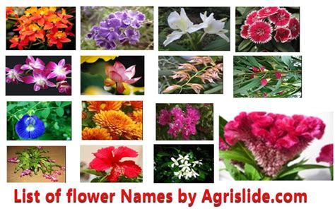 list of flowers list of flower names with scientific name family and pictures