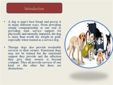 difference between service and therapy the differences between service dogs therapy and emotional
