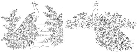 indian peacock coloring page indian adult peacock coloring pages