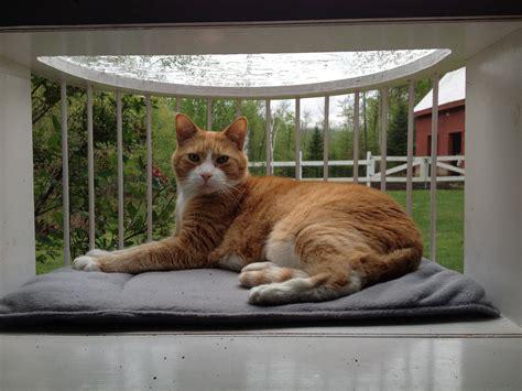 cat window box cat solarium