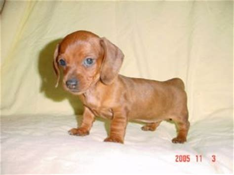 show me pictures of baby puppies the dognabbit 1 15 06 1 22 06