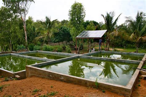 backyard catfish farming tilapia or catfish farming can be done zimbabwe farming