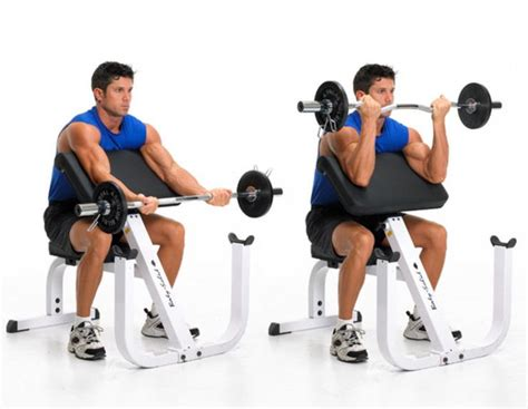preacher bench exercises 78 best images about biceps exercises on pinterest cable