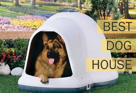 the best house dog homeward bound the best dog house for your hound mysweetpuppy net