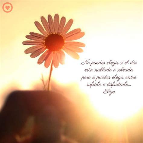 imagenes de buenos dias amor con girasoles bonito mensaje de buenos dias con girasol