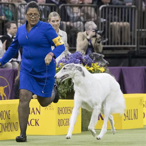Best In Show Puppy 15kg westminster show 2018 results best of breed winners and monday recap bleacher report