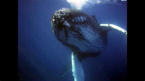 imagenes de animales y sonidos los sonidos de los animales marinos youtube