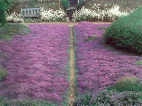 landscape design the search for an alternative to lawn