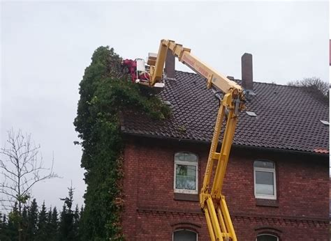 Efeu Beseitigen by Pflanzarbeiten Und Zaunbau In Alfeld Bei Hildesheim