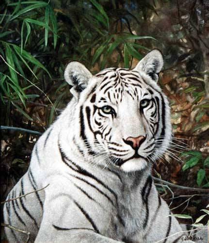 imagenes en blanco de animales im 193 genes y fotos de animales tigre de bengala blanco