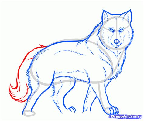 how to a wolf draw a gray wolf timber wolf step by step drawing sheets added by march 30