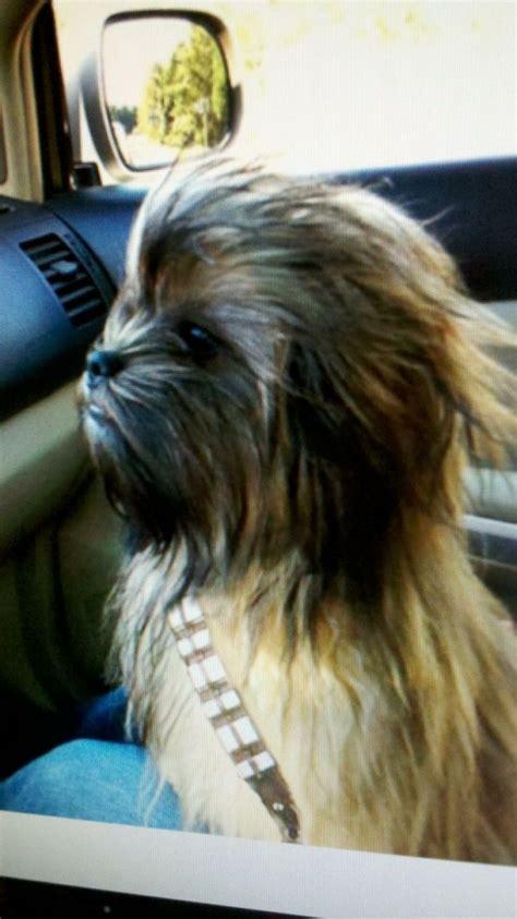 chewbacca puppy pin chewbacca costume on