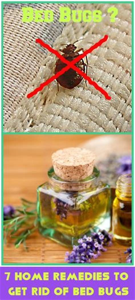 ideas  bed bug remedies  pinterest bed bugs bed bugs treatment  bed bug trap