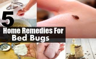 home remedies for bed bugs bites 5 top home remedies for bed bugs diy health remedy