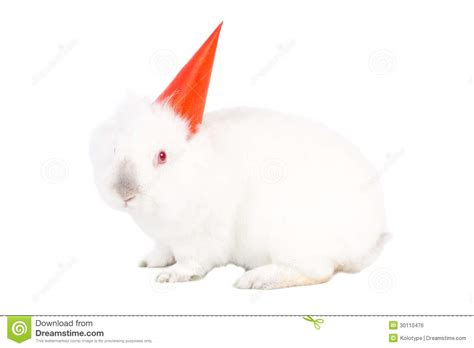 white rabbit new year lovable white bunny rabbit in a hat stock photo