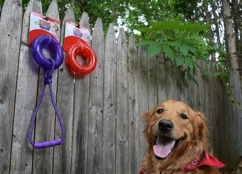 backyard toys for dogs fun in the sun the 6 best outdoor dog toys of 2017