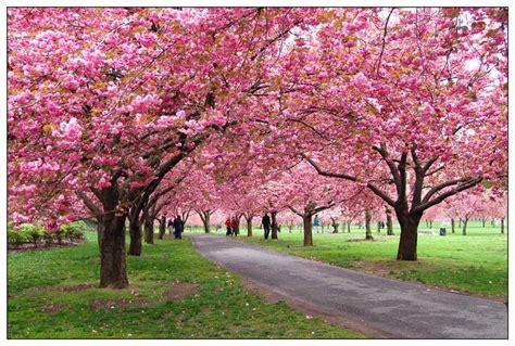New York Botanical Garden Free I Am A Fordham Ram Fordham And The New York Botanical Garden