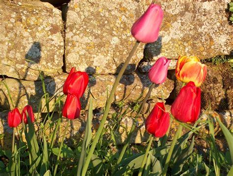 derivato di fiore derivato di tulipano fiori idea immagine