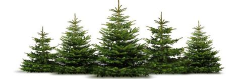 weihnachtsbaum verkauf weihnachtsb 228 ume gut loy in rastede oldenburg