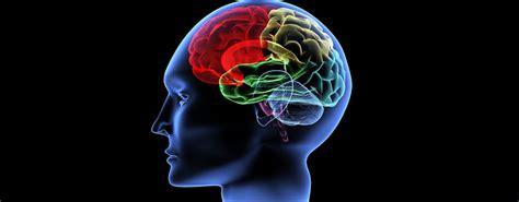 test quoziente intellettivo il cervello paga il prezzo della povert 224 scende il
