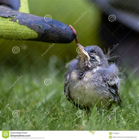 baby bird feeding on worm stock photo image of hunger