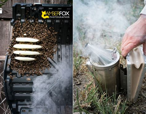 How To Get Rid Of Bees In Backyard by Fullerton Bees Backyard Beekeeping 187 Fox Photographer