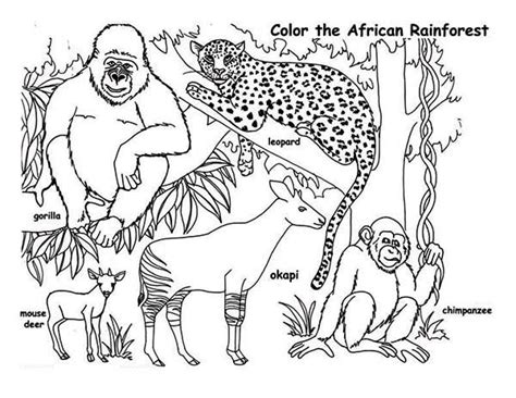 coloring pages of animals in the rainforest animals coloring pages getcoloringpages