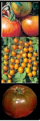 starting an organic vegetable garden starting an organic vegetable garden just fruits and exotics