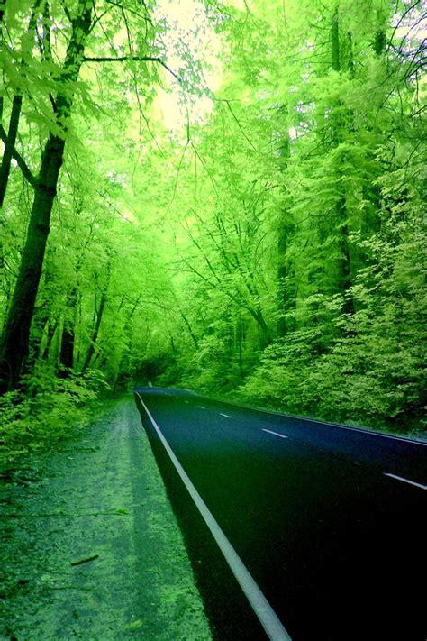 green forest road wallpaper allwallpaperin  pc en