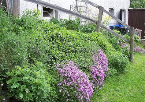 Garten Hangbefestigung Pflanzen by Stauden Und Bodendecker Geh 246 Lze Zur Hangbefestigung