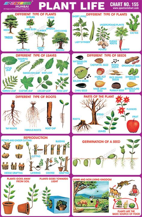 herb care chart herb care chart best free home design idea inspiration